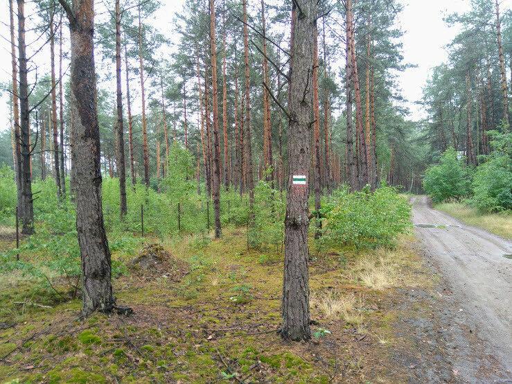 działka w lesie